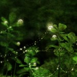 Dew drops and sparklies
